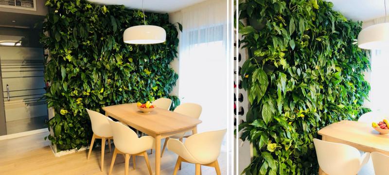 viki perete verde
